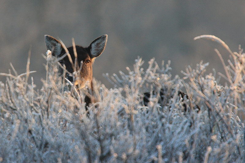 AWD OW-MAIL (4)